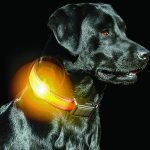survival gear Brite-Strike Rechargeable Lighted Dog Collar