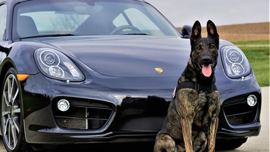 Personal Protection Dog car