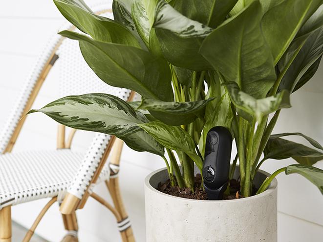 canary camera plant