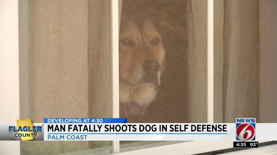 florida german shepherd shooting