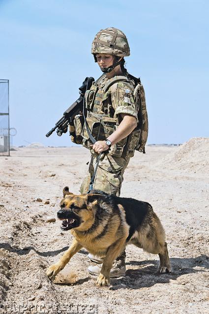 Gun Dog Puppy Supplies