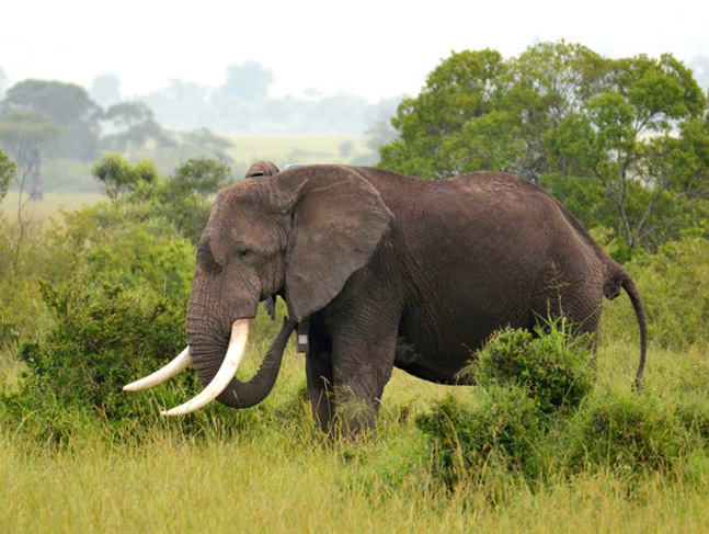 Drones Used in Fight Against Elephant Poaching