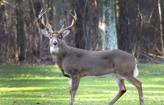 Ohio deer-gun season will expand by 30 minutes per day.