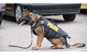 Protective vests which provide protection from bullet and stab wounds have been given to twenty-four police dogs in Vermont and New Hampshire.