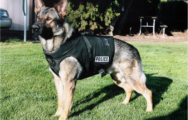 Rocco's Law K-9