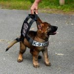 Tuco puppy lead