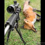 DoubleStar StarCar A3 AR 2015 fox