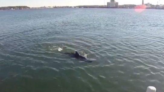 GhostSwimmer Drone Shark U.S. Navy