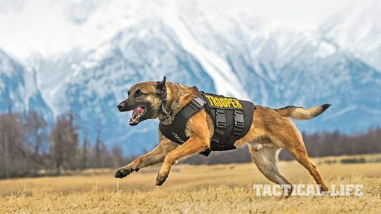 Vested Interest in K9s Police Dogs GWLE April 2015 lead