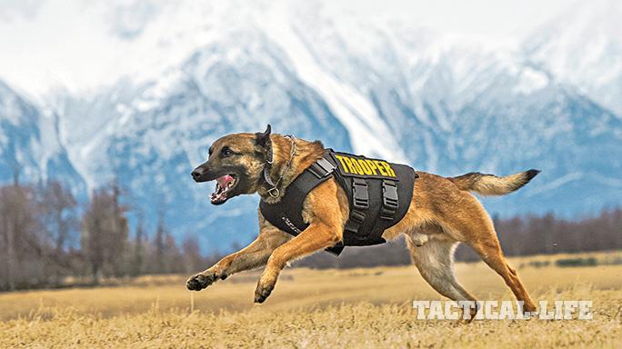 Vested Interest in K9s Police Dogs GWLE April 2015 lead