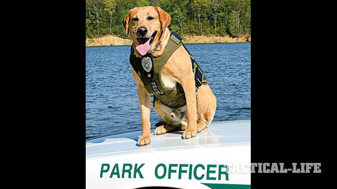 Vested Interest in K9s Police Dogs GWLE April 2015 park