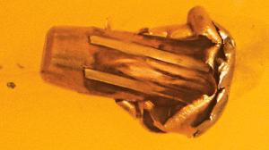 Tactical Weapons Hornady ELD Ammo mushroom