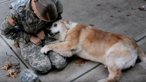 Hannah Foraker Dog Cries Soldier Returns Home