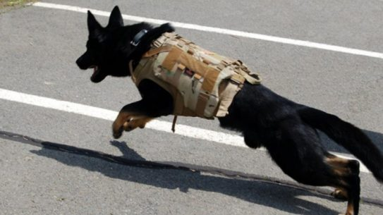 Velocity Systems specializes in K-9 protection gear