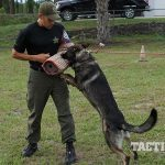 Volusia County K9