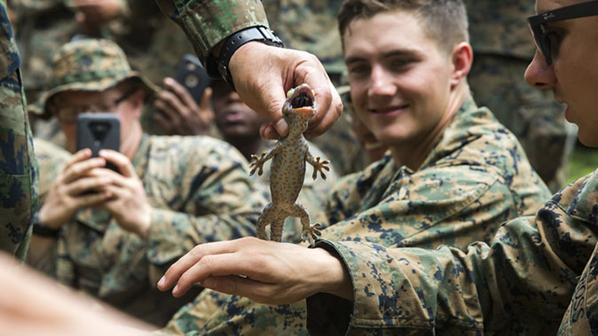 marines cobra gold gekko