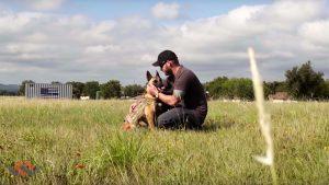 Warriors Heart PTSD dog