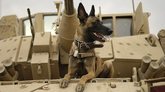 sas dog tank
