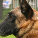 sas dog left profile